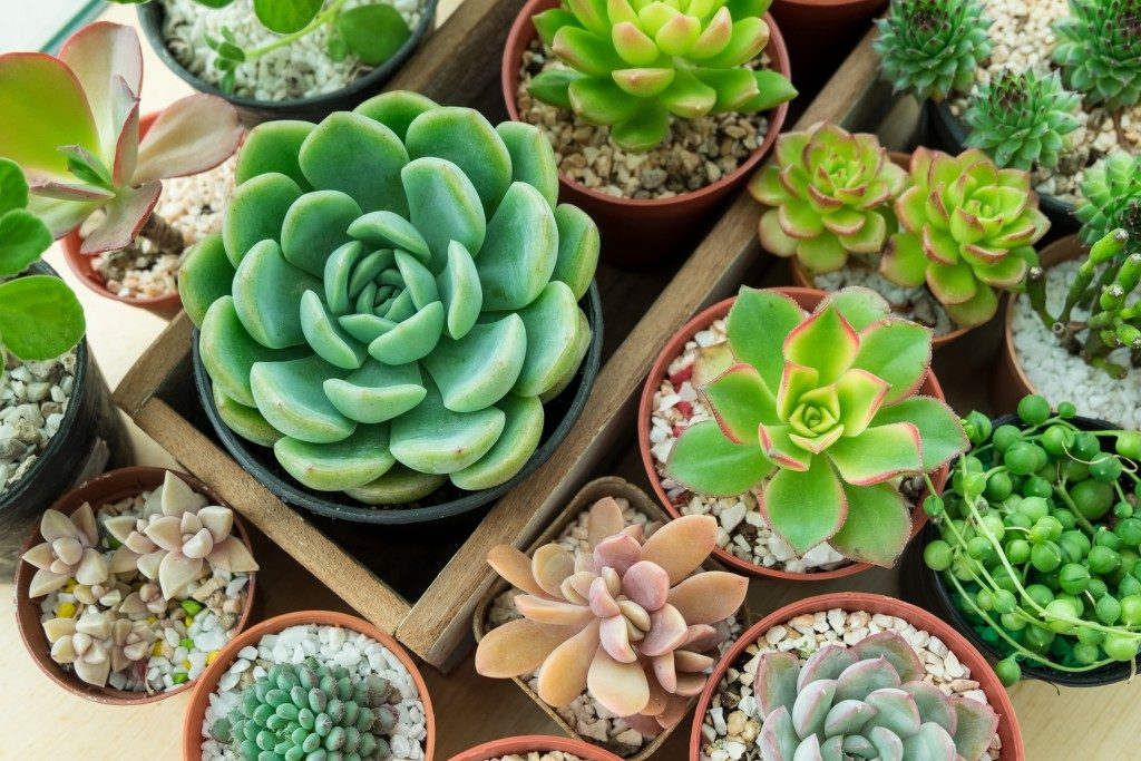 Top view of various types of succulent plant pot