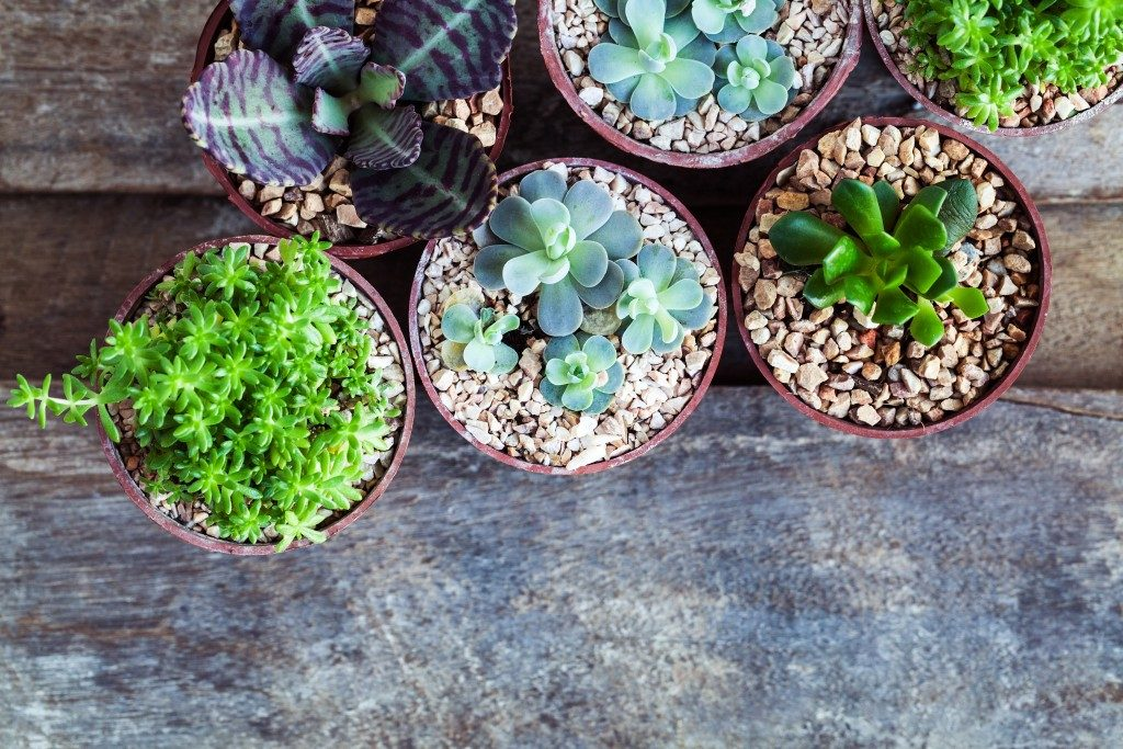 Succulents and cactus in different concrete pots