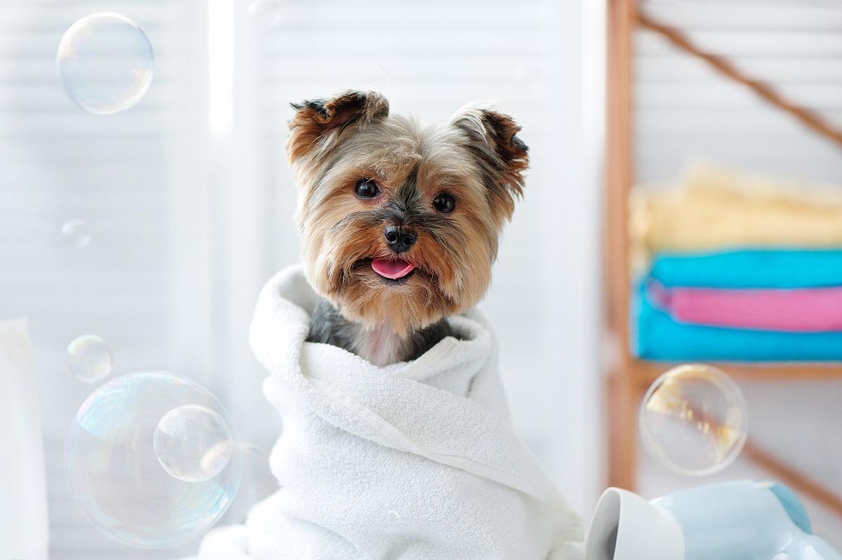 newly groomed dog